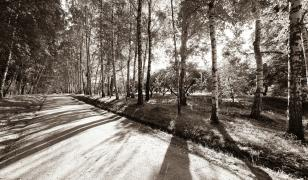 Black and White Forest Road Mural